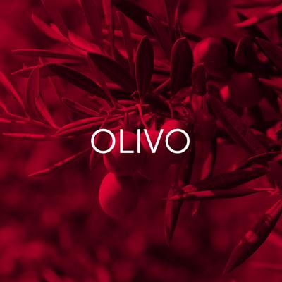 Olivo - Cambrico