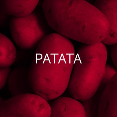 Patata - Cambrico