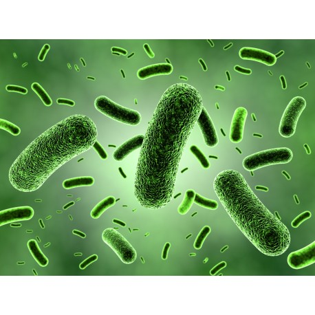 Análisis de virus vegetales