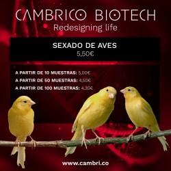 Sexado de aves (jilgueros, canarios, turacos, negritos de bolivia, halcones, azores, lechuzas...