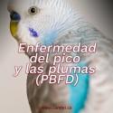 Enfermedad Pico y Pluma (PBFD)