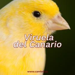 Viruela del canario