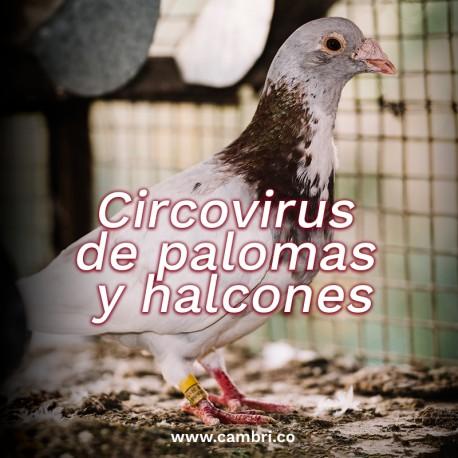 Circovirus de Palomas / Halcones