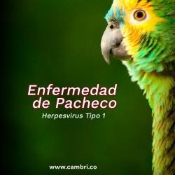 Enfermedad de Pacheco (PsHVs)