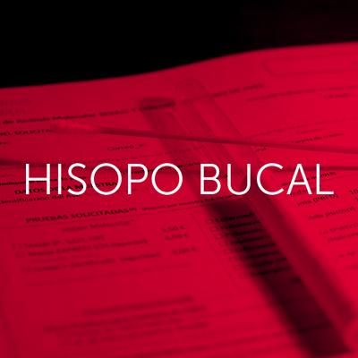 Hisopo - Cambrico