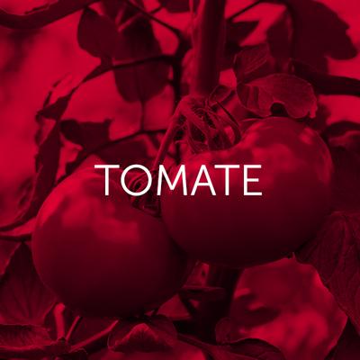Tomate - Cambrico